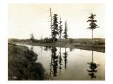 Treaty Trees at Medicine Creek  1924