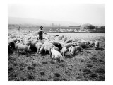 Ellensburg  WA  Goodwin Hogs  1915
