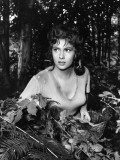 Gina Lollobrigida in &quot;Pane  Amore E Gelosia&quot; by Luigi Comencini  1954
