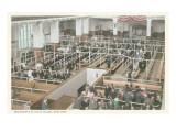 Immigrant Processing  Ellis Island  New York