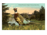 Chinese Pheasant  Oregon Game Bird