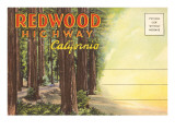 Postcard Folder  Redwood Highway  California
