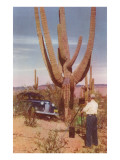 Man Photographing Saguaro