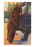 Bear at Car Window