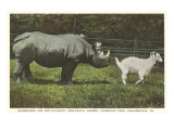 Rhino and Goat  Zoo  Philadelphia  Pennsylvania