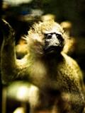 A Taxidermy Tree Monkey