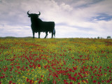 Bull Statue  Toros De Osborne  Andalucia  Spain