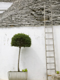 Ladder and Potted Tree  Trulli Houses  Alberobello  Puglia  Italy