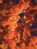 USA  New England  Maine  Acadia National Park  Fall Foliage