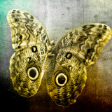 Creative Image of a Mounted Exotic Butterfly