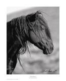 Wild Stallion I