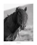 Wild Stallion II