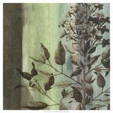 Painted Botanical IV