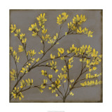 Forsythia I
