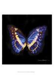 Techno Butterfly II