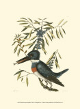 Small Antique Kingfisher II
