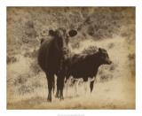 Lone Star Cows I
