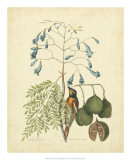 Catesby Bird &amp; Botanical II