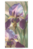 Asian Iris I
