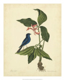 Catesby Bird &amp; Botanical IV