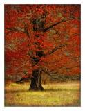 Autumn Oak II