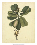 Catesby Bird &amp; Botanical III