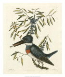 Antique Kingfisher II