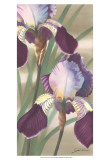 Asian Iris II