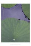 Lotus Detail X