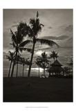 Palms at Night I