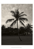 Palms at Night II