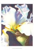 Blue Iris I