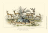 Antelope Varieties