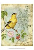 Songbird Sketchbook III