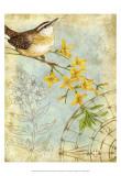 Songbird Sketchbook I