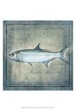Ocean Fish X