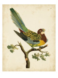 Nodder Tropical Bird II
