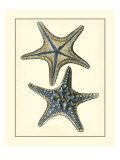 Antique Blue Starfish II Reproduction d'art par Vision Studio