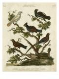 Ornithology II