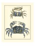 Antique Blue Crabs II Reproduction d'art par Vision Studio