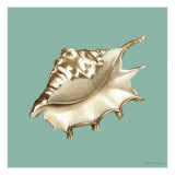 Shell on Aqua IV