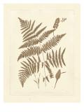 Sepia Ferns I Reproduction d'art par Vision Studio