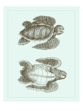 Loggerhead Turtles I