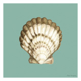 Shell on Aqua III
