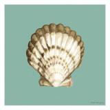 Shell on Aqua III
