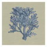 Chambray Coral IV Reproduction d'art par Vision Studio