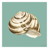 Shell on Aqua I