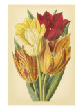 Tulip Array II