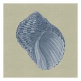 Chambray Shells III Reproduction d'art par Vision Studio
