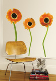 Orange Poppies